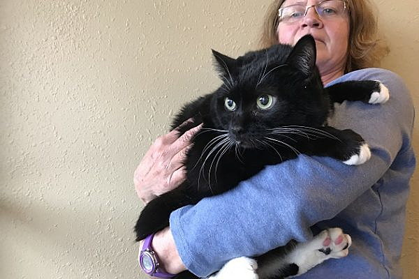 Calhoun is the Wenatchee  Humane Society Pet of the Week